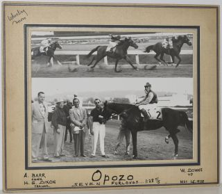 "RACEHORSE ""OPOZO"". ORIGINAL PHOTO."