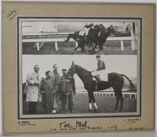 "RACEHORSE ""TOR MEL"". ORIGINAL PHOTO"