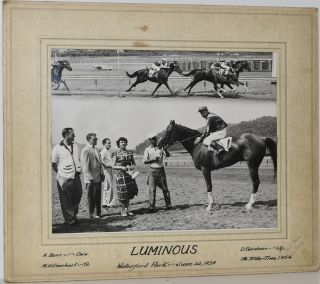 "RACEHORSE ""LUMINOUS"". ORIGINAL PHOTO."